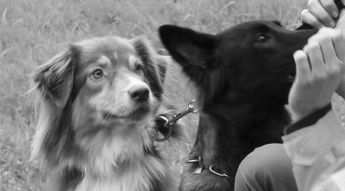 Fitness mit dem Hund: Bewegung für Mensch und Tier